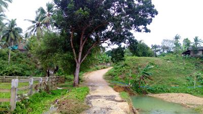 ヤシの木に囲まれた一本道